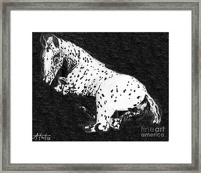 Appy Foal In Clover Framed Print by Audrey Van Tassell