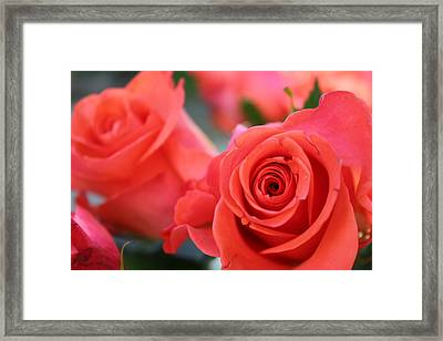 Framed Print featuring the photograph Apricot Beauty by Judy Palkimas