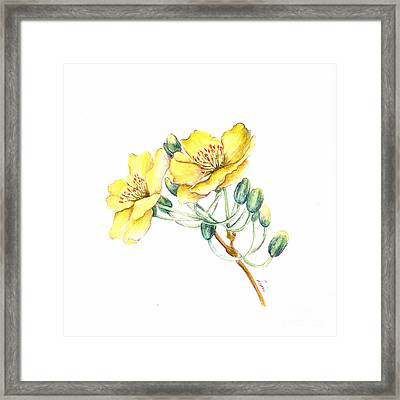 Apricot Blossom Framed Print by Dion Dior
