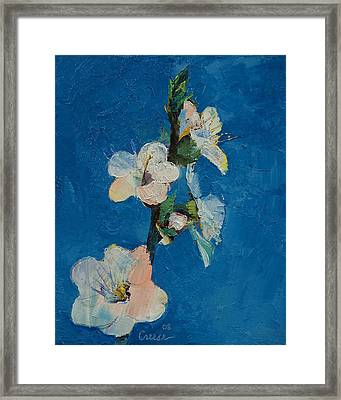 Apricot Blossom Framed Print by Michael Creese