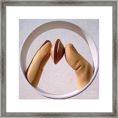 Apricot Seed Framed Print by Gyula Friewald