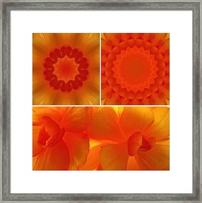 Apricot Framed Print by Tom Druin