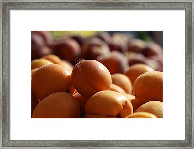 Apricots Framed Print by Terry Horstman