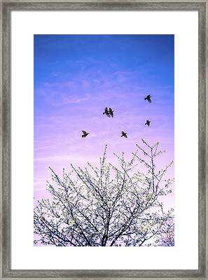 April Dawn Framed Print by Jan Bickerton