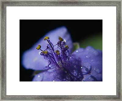 April Showers Framed Print