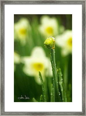 April Showers Framed Print by Joan Davis