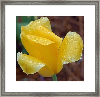April Showers Framed Print by Suzanne Gaff