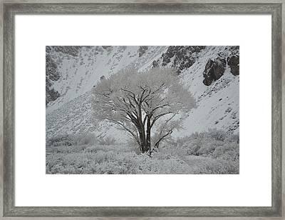 April Snow In Utah - Tree Framed Print