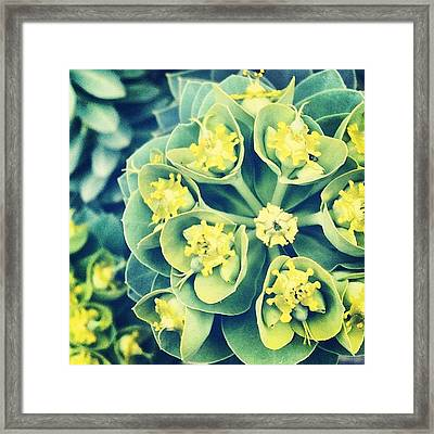 #aprilphotoaday Day 11: #detail Framed Print