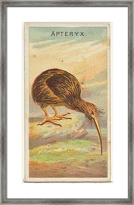 Apteryx, From The Birds Of The Tropics Framed Print