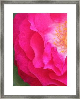 Aquarella Framed Print