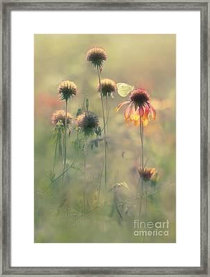 Aquarels Framed Print