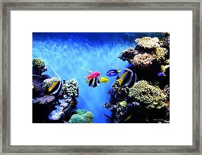 Aquarium 1 Framed Print by Barbara Snyder