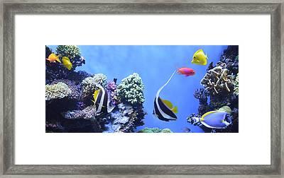 Aquarium 5 Framed Print by Barbara Snyder