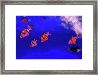Aquarium Art 11 Framed Print by Steve Ohlsen