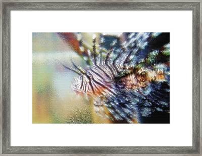 Aquarium Art 12 Framed Print by Steve Ohlsen