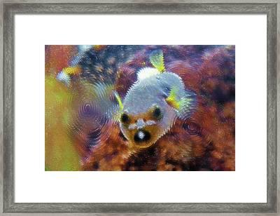 Aquarium Art 16 Framed Print by Steve Ohlsen