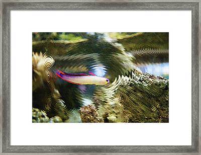 Aquarium Art 25 Framed Print by Steve Ohlsen