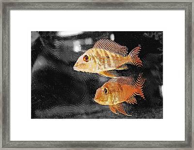 Aquarium Art 26 Framed Print by Steve Ohlsen
