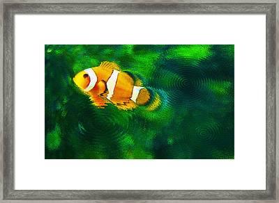 Aquarium Art 27 - Solo Clown - Feeding Time Framed Print by Steve Ohlsen