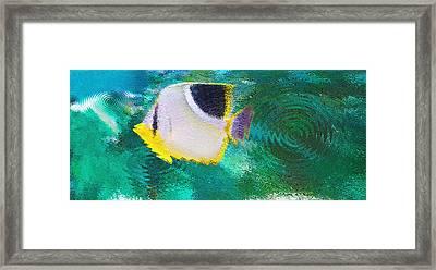 Aquarium Art 29 Framed Print by Steve Ohlsen