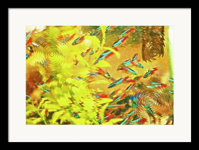 istic Fish Abstraction Mixed Media Framed Prints