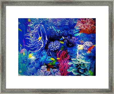Aquarium Color Framed Print by Dan Sproul