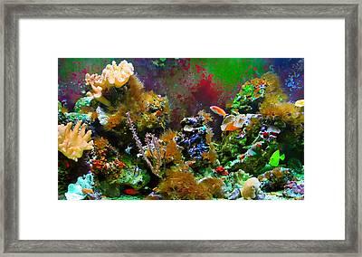 Aquarium Framed Print by Kara  Stewart