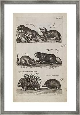 Aquatic Animals Framed Print by British Library