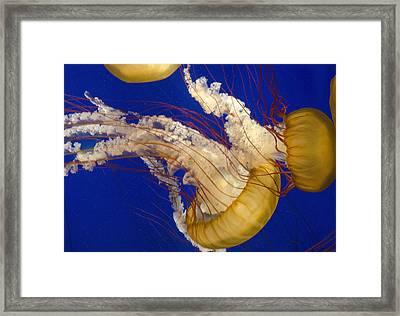 Aquatic Ballet Framed Print