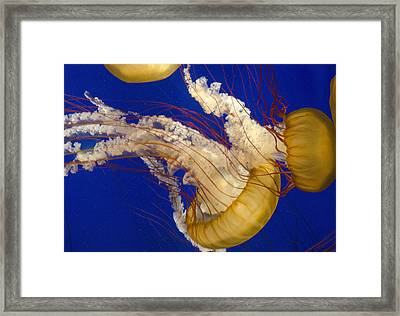Aquatic Ballet Framed Print by George Hawkins