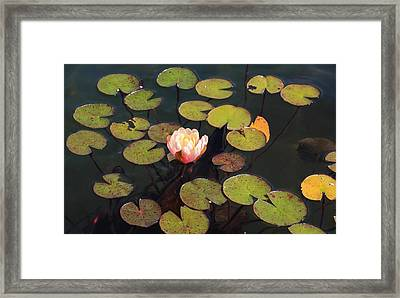 Aquatic Garden With Water Lily Framed Print