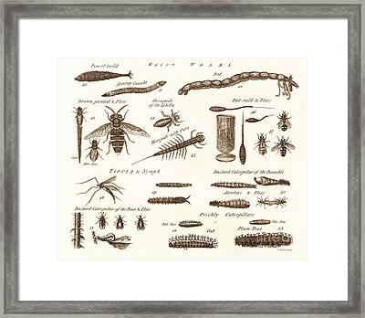 Aquatic Worms, Flies And Catapillars. Framed Print by David Parker