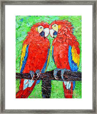 Ara Love A Moment Of Tenderness Between Two Scarlet Macaw Parrots Framed Print by Ana Maria Edulescu