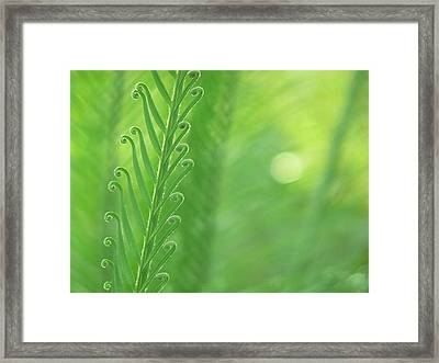 Framed Print featuring the photograph Arabesque by Evelyn Tambour
