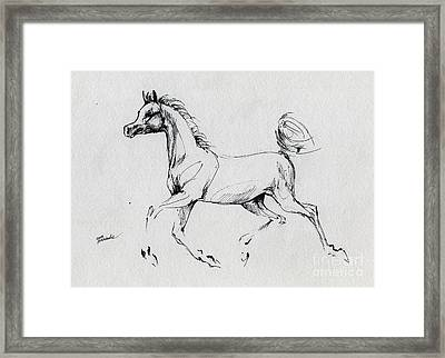 Arabian Foal Sketch  Framed Print by Angel  Tarantella