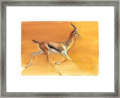 Arabian Gazelle Framed Print