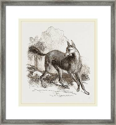 Arabian Greyhound Framed Print by Litz Collection