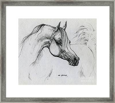 Arabian Horse Drawing 28 Framed Print by Angel  Tarantella