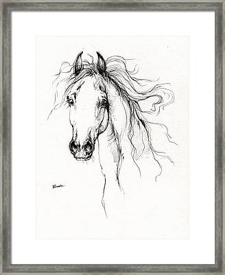 Arabian Horse Drawing 4 Framed Print by Angel  Tarantella
