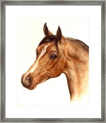 Arabian Horse Head Study Framed Print by Julia Sweda