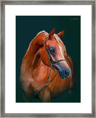 Arabian Horse Framed Print by Marina Likholat