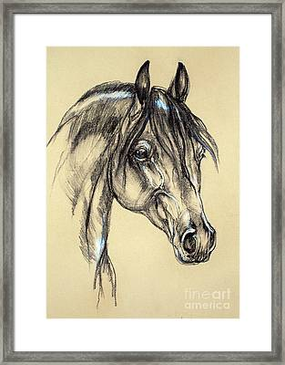 Arabian Horse Sketch Framed Print
