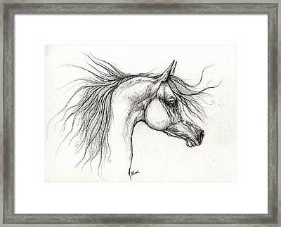 Arabian Horsedrawing 28 08 2013 Framed Print by Angel  Tarantella