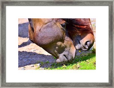 Arabian Horses Framed Print