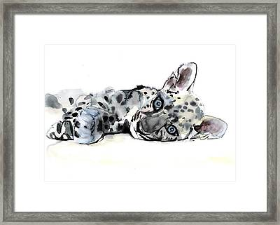 Arabian Leopard Cub Framed Print by Mark Adlington