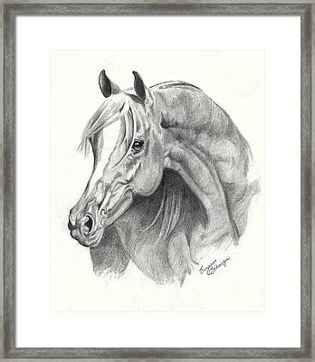 Arabian Stallion Framed Print