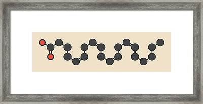 Arachidonic Acid Molecule Framed Print by Molekuul