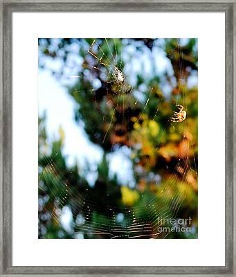 Arachnid Art Framed Print