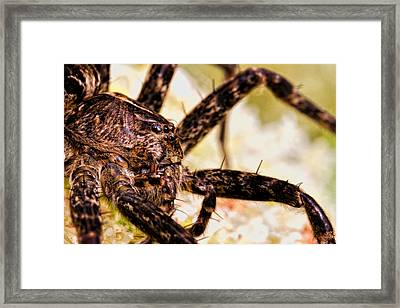 Arachnophobia Framed Print